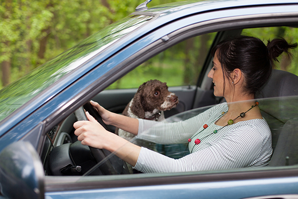 Woman Pet Owner Taking Dog for a Day Trip Drive in Car | Family Life Tips Magazine