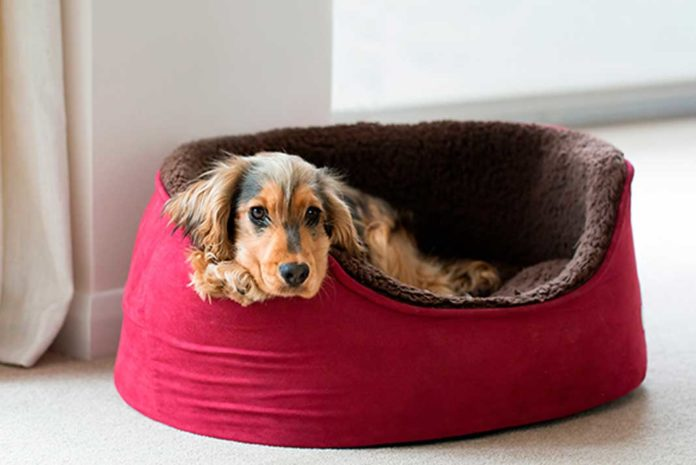 Give Your Dog or Cat Something to Call Their Own a Pet Bed | Family Life Tips