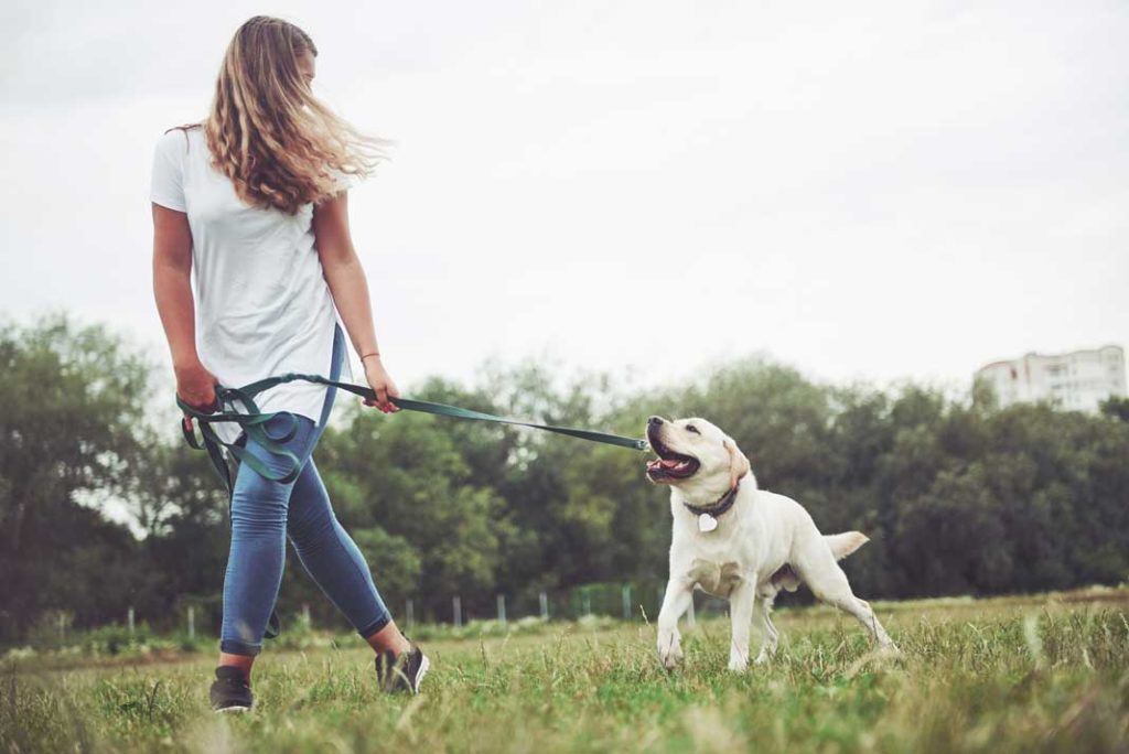 Dog Going For Walk With Dog Collar and Leash - Family Life Tips