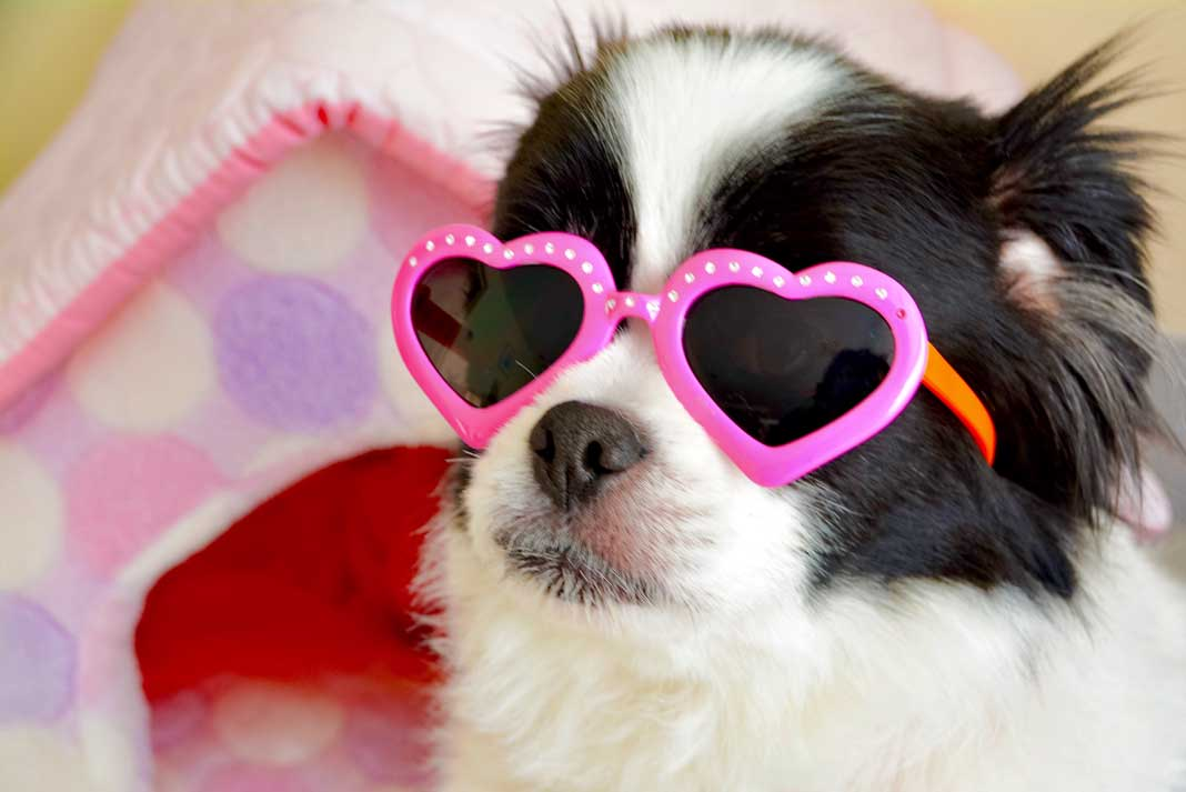 Why You Should Get Valentine's Gifts for Dogs - Family Life Tips